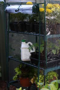 Coldframe Replacement Plastic Glass