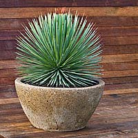 Garden Pots for sale Online Garden Pots for sale UK
